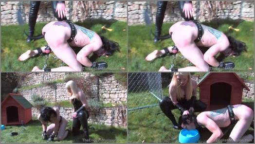 The English Mansion  Lexis New Puppy Part 2   Goddess Lexi  preview