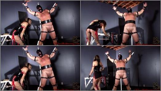 Amateur – CBT and Ballbusting – Helpless and Beaten –  Mistress Dahlia