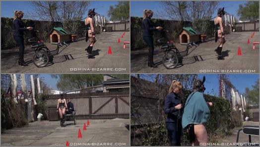 Domina Bizarre  Ponygirl 3  Sulkytraining  preview